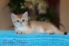 300x200-images-stories-kittens-img_3648_-_